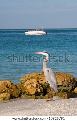 Wildlife refuge birds on an island nature perserve in florida - stock photo
