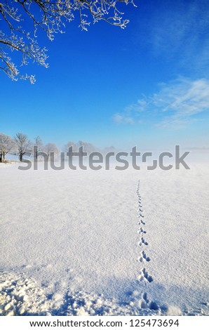 Wildlife tracks goes straight into a field with some mist and blue sky