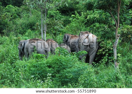 Wilds Elephant at Khao yai National Park Thailand.