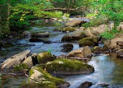 willard brook  located in willard brook state forest  in ashby massachusetts