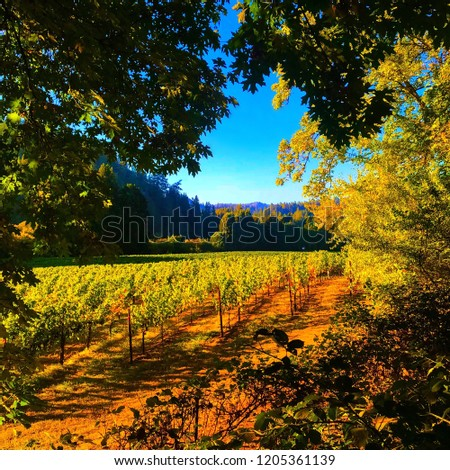 Williams Selyem vineyard in Guerneville, Ca. Stock fotó ©