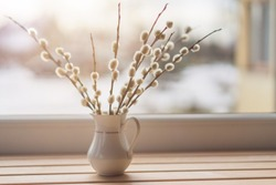 Willow catkins in vase on the window, toned