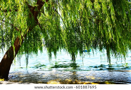 Willow tree by the water\n