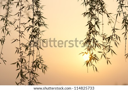 willow tree leaf in a sunset lakeside - stock photo