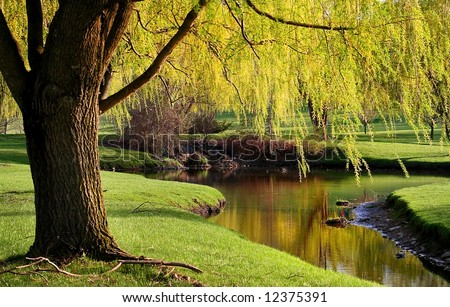 Willow trees by the river side in Michigan park