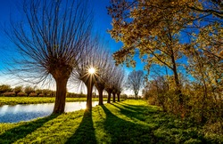 Willow trees in het Weegje during sunset in autumn