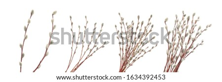 Willow twigs isolated on white. without shadow Stock fotó ©