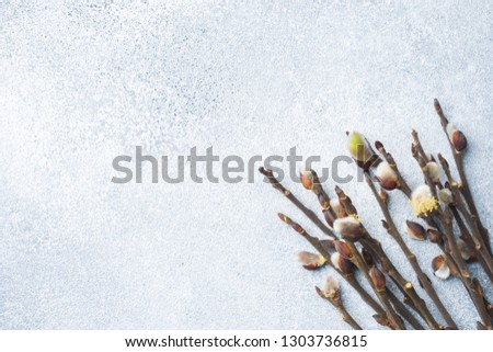 Willow twigs on grey background with copy space #1303736815