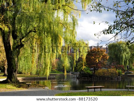 willows and pond in peaceful Boston Central Park in autumn