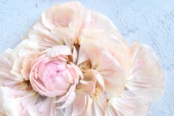 Wilted pastel ranunculus flower decayed into tender petals on gray background, selective focus. Faded roses flower. Dead flower