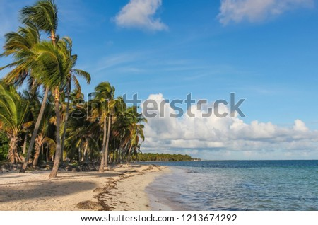 wind and palm trees on the Catalonia Bavaro beach in the Dominican Republic