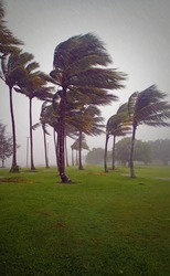 Wind and rain lash the tropical coast as a hurricane (cyclone) approaches - palm trees bending in the storm