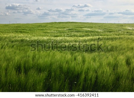 Wind blowing a wheat field. Green wheat field in the wind. Beautiful green wheat field background  - Shutterstock ID 416392411