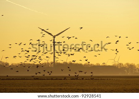Wind energy and flying birds at sunrise