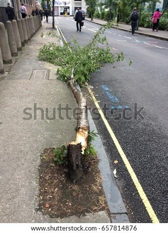 Wind fallen tree #657814876