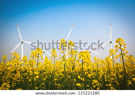 wind farm and yellow rapeseed flower in bloom with a clear sky
