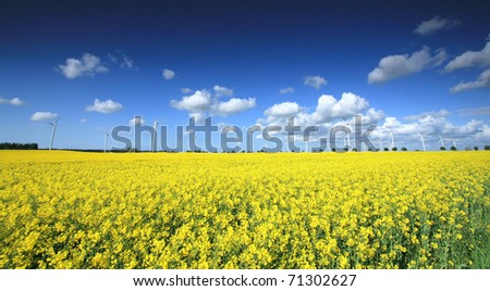 Wind farm on the rapeseed field