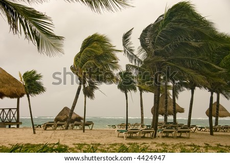 wind storm over the Caribbean sea over an empty beach with palm trees, mexico