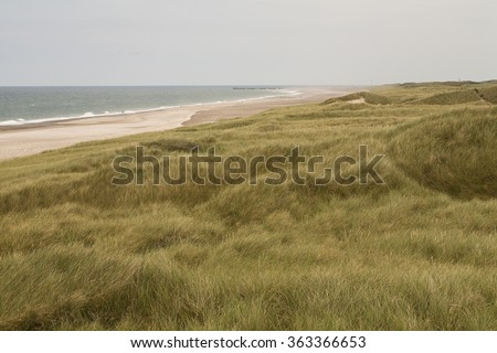 Wind Through the Dune Grass.The dune grasses on the west coast of Denmark are prolific. Swathes of the west coast are covered in the grasses and its subtle colours ripple as the wind moves through it. #363366653