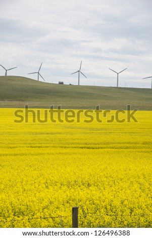 Wind turbines above fields of canola in Canada