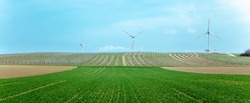 Wind turbines in green Landscape panorama agriculture field wheat, Rows of grapes bunches in vineyard, on a hill with a refuge house, Vineyard house or Tower, Vineyards, Rhineland Palatinate, Germany