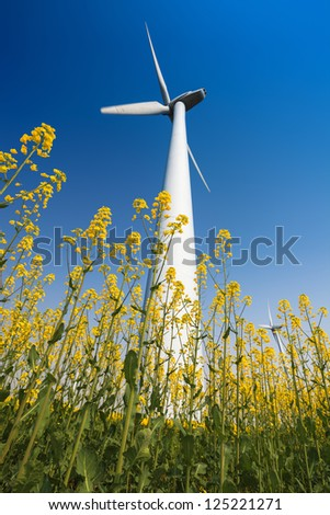 wind turbines in rapeseed field with a clear sky