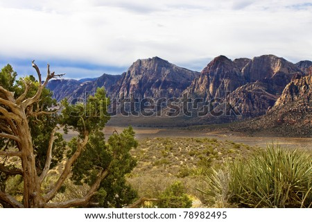 Windblown evergreen and cactus in foreground of desert  with colorful mountains in background