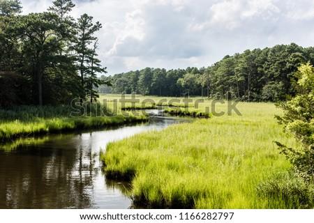 winding creek through salt marsh