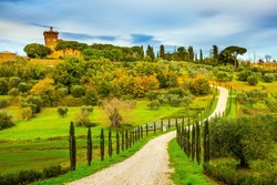 Winding dirt road rises to the farm. Olive trees on green grassy meadows. Rural tourism. Cozy picturesque farms in the hills of Tuscany. The concept of active, rural and photo tourism