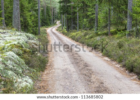 Winding dirt road through the woods