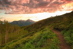 Winding dirt trail in the Wasatch Mountains, Utah, USA.