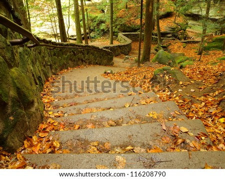 Winding forest steps with autumn leaves