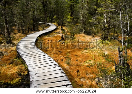 Winding forest wooden path walkway through wetlands, milford  track, new zealand