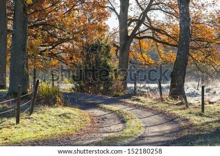 Winding gravel road through oak forest