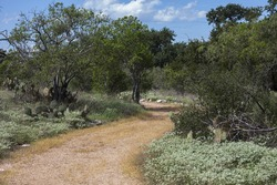 Winding hiking trail in the Texas Hill Country.