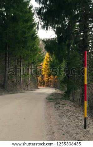 Winding macadam road and yellow-red snow plow stake in coniferous woods in autumn. Winter services, plowing and forestry concepts.