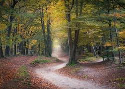 Winding road in an autumn forest, Kaapse Bossen, Utrechtse Heuvelrug, Netherlands