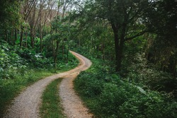 Winding road in the jungle