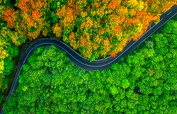 Winding road splitting thick forest in two seasons. Autumn and summer, aerial view