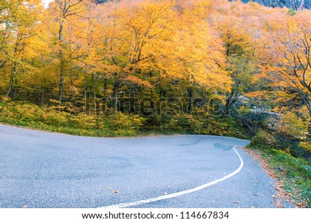 Winding road through fall foliage - stock photo