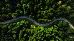 Winding road trough dense pine forest. Aerial drone view, top down.