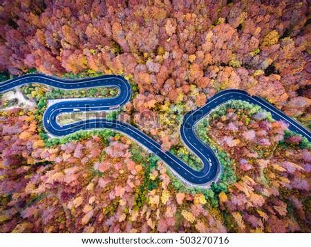 Winding road trough the forest in Transylvania, Romania #503270716