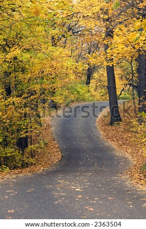 Winding road under autumn canopy