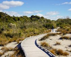 Winding Wood boardwalk and Wildness at ship creek walks west coast of South Island New Zealand