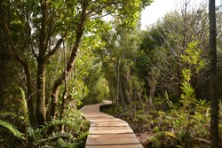 Winding wooden footpath through a magical, dense forest on the island of Chiloe, Chile.