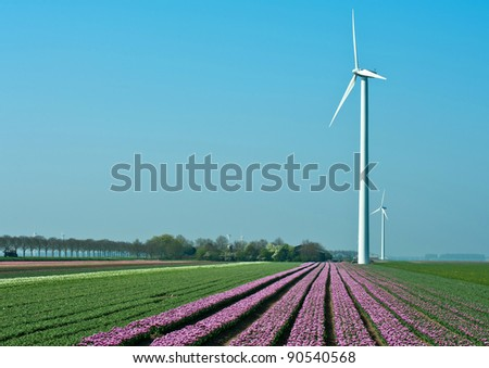 Windmill and flowers under a blue sky, Holland, Europe