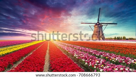 Windmill at sunrise in Netherlands. Traditional dutch windmill, green grass, fence against colorful sky with clouds. Rustic panoramic landscape in the sunny morning in Holland. Rural scene. Travel