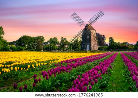 windmill in beautiful color tulips field  Сток-фото ©