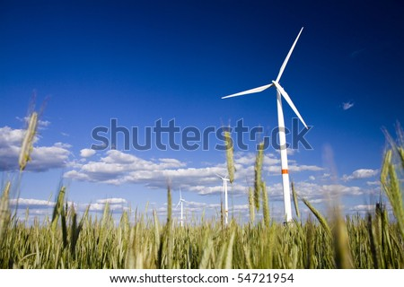 Windmills in a field of rye with blue sunny sky