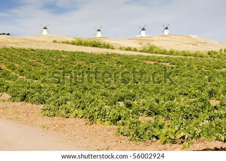 windmills with vineyard, Alcazar de San Juan, Castile-La Mancha, Spain